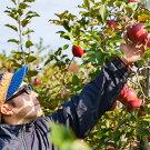 農家から食べ頃で届く果物セット