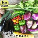 【ふるさと納税】【定期便 6回】 ひばり農園の無農薬ワクワク 野菜セット《予約受付 6月より発送開始》