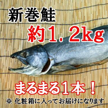 【ふるさと納税】D-040 【1本まるまる】新巻鮭(約1.2キロ)