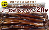 【ふるさと納税】三陸の生イカ20杯(急速冷凍)