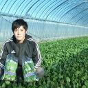【ふるさと納税】岩手県三陸北部 普代村特産ほうれんそう 10袋