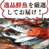 【ふるさと納税】石巻港直送逸品鮮魚2018