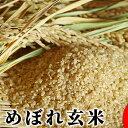 【ふるさと納税】【令和元年産】景綱米(ひとめぼれ)玄米 10...