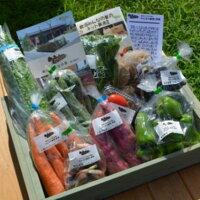 【ふるさと納税】採れたて野菜を箱いっぱい詰め込んで♪岩沼みんなの家の「みんなの直売!野菜」セット詰め合わせ 【野菜・セット・詰合せ】