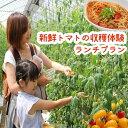 【ふるさと納税】新鮮ミニトマトの収穫体験&ランチプラン