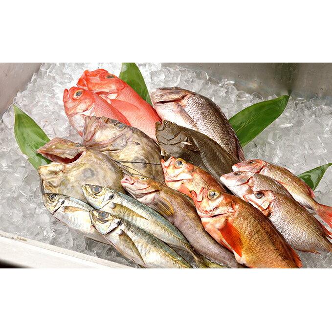【ふるさと納税】【光勝丸】漁師さんのおまかせ鮮魚セット 【魚介類】