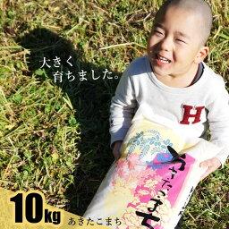 【ふるさと納税】 あきたこまち100% 10kg (白米 10kg×1袋) 秋田県 能代産