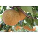 【ふるさと納税】南水 5kg(10玉〜14玉) 【梨・果物・