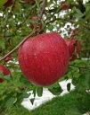 【ふるさと納税】A3201 三関りんご3kg満杯詰め...