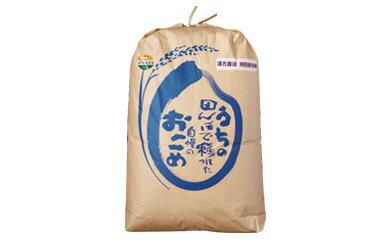 特別栽培米 漢方栽培精米20kg