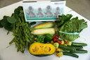 【ふるさと納税】A3102 楽しい畑のおすそわけ体験野菜詰合...