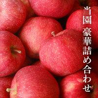 【ふるさと納税】りんごふじ果樹園倶楽部(りんごふじ11個、りんご果汁100%ジュース1L2本)