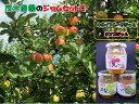 【ふるさと納税】A76418 茂木農園の手作りジャムセットC(りんご、洋梨、キウイ)各250g りんごジャム 洋梨ジャム キウイジャム