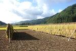 仙人米(低農薬・有機米)5kg【数量限定】