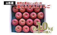 【ふるさと納税】FY20-567自然の恵みいっぱいの葉とらずふじりんご約10kg(36個〜40個)