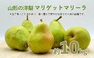 【ふるさと納税】FY20-575山形の洋梨マリゲットマリーラ秀品約10kg(7〜15玉)