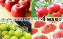 【ふるさと納税】FY18-884【先行予約】うまい山形フルーツ定期便Aコース