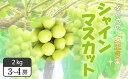 【ふるさと納税】FY18-866【先行予約】山形産 シャイン...