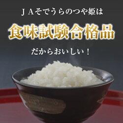 【ふるさと納税】特別栽培米つや姫10kg (5kg×2袋) 令和2年産米 山形県産 ご希望の時期頃にお届け ※着日指定不可 画像1