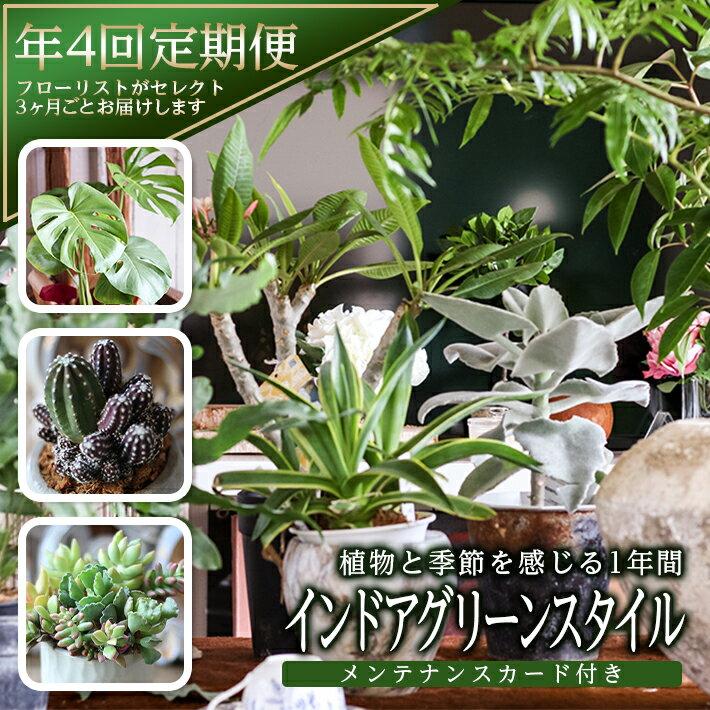 ≪年4回定期便≫植物と季節を感じる1年間「インドアグリーンスタイル」 観葉植物 お申込み日の翌月から3ヶ月ごと4回お届け
