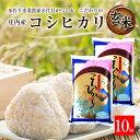 【ふるさと納税】新米 玄米 コシヒカリ10kg 一等米 令和