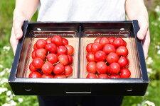 【ふるさと納税】Y字栽培さくらんぼ「紅秀峰」700g秀品・Lサイズ以上!《置詰》