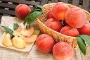【ふるさと納税】山形の白桃 <品種おまかせ> 3kg(8〜1
