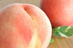 【ふるさと納税】山形の白桃 <品種おまかせ> 3kg(8〜14玉) 秀品 画像2