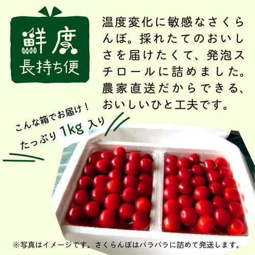 【ふるさと納税】さくらんぼ2019年産「佐藤錦」荷姿