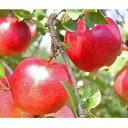 【ふるさと納税】りんご シナノスイート 約5kg 秀 令和三年産 2021年産 果物 送料無料
