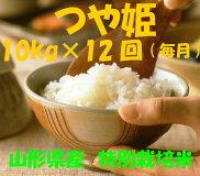 【ふるさと納税】D-97☆特別栽培米「つや姫」10kg×12回(毎月)定期便