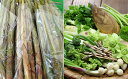 【ふるさと納税】採れたて細竹500gと山菜セット(3〜7品程...