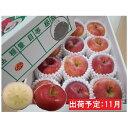 【ふるさと納税】11月 贈答規格 蜜入りこうとくりんご約3kg特秀〜秀【大江町産・山形りんご・りんご専科 清野哲生】 【果物類・林檎・りんご・リンゴ】 お届け:2021年11月1日〜2021年11月15日