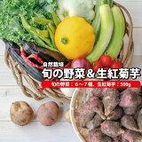【ふるさと納税】自然栽培 旬の野菜 6〜7種 & 土つき フランス種 生紅菊芋 約500g