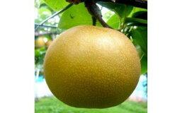 【ふるさと納税】No.0365先行予約健康にいい栄養たっぷりな梨なし/新高3kg(6玉〜7玉)