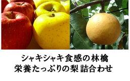 【ふるさと納税】No.0375先行予約シャキシャキ食感の林檎と栄養たっぷりの梨詰合せりんご/シナノゴールド&シナノスイート・なし/新高5kg(12玉〜14玉)