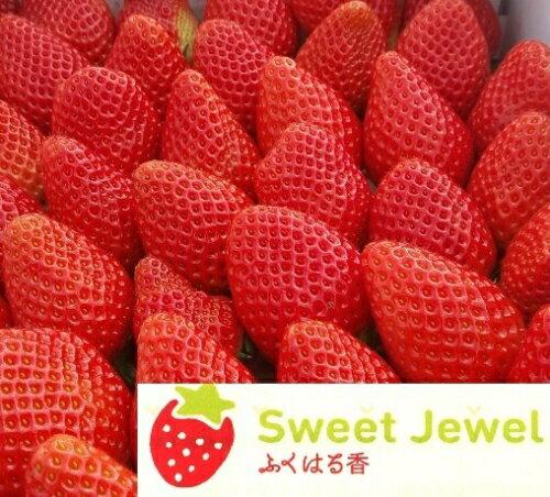 【ふるさと納税】伊賀いちご園のレギュラーパック2P(280g/パック×2パック) - イチゴ ストロベリー strawberry ふくはる香 とちおとめ【18003】