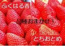 【ふるさと納税】【先行予約】伊賀いちご園のおまかせ4P(1パ...