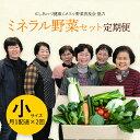【ふるさと納税】定期便 西会津ミネラル野菜セット(小) 月1...