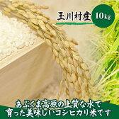【ふるさと納税】福島県玉川村産コシヒカリ米(10kg)