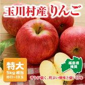 【ふるさと納税】【玉川村こぶしの里】契約栽培りんご特大サイズ約11〜13玉(5kg相当)