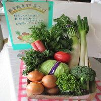 A-9日立市産新鮮野菜セット