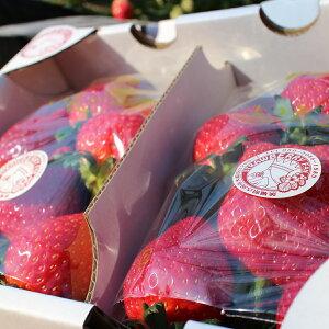 【ふるさと納税】イチゴ農園から完熟・朝採りをお届け!宝石のような輝きのとちおとめ…