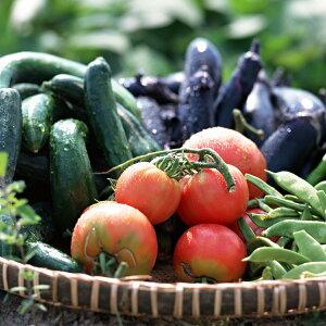 【ふるさと納税】古河の旬を選べる野菜セット定期便(年1回)道の駅で人気の生産者の…