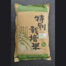 【ふるさと納税】生産者直送!古河産の「特別栽培米」コシヒカリ