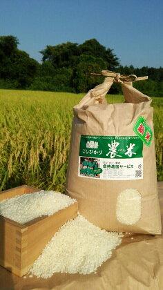 平成29年古河市産 コシヒカリ10kg【倉持農園】