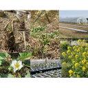 【ふるさと納税】CI-1 農業体験 笠間市 食育 収穫 レジャー ファミリー 野菜