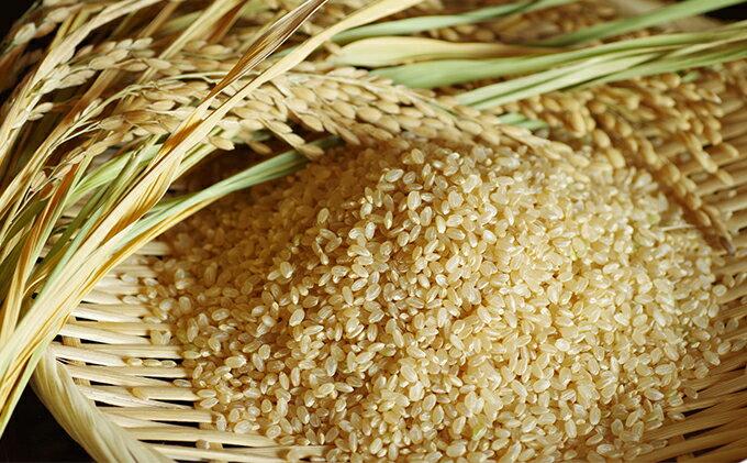 【ふるさと納税】茨城の大粒新人 特選ふくまる 特別栽培米10kg(玄米発送) 【玄米・お米】