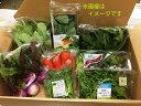 【ふるさと納税】〜年4回お届け!〜四季の有機野菜色とりどりセット