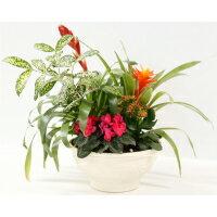 【ふるさと納税】季節の観葉植物・花寄せ植え